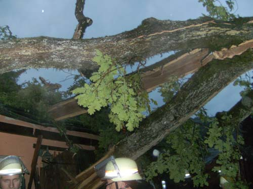 Baum auf Wohnhaus 2013
